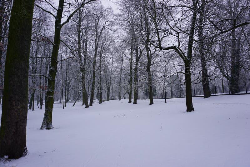 Invierno en el parque 8 imágenes de archivo libres de regalías