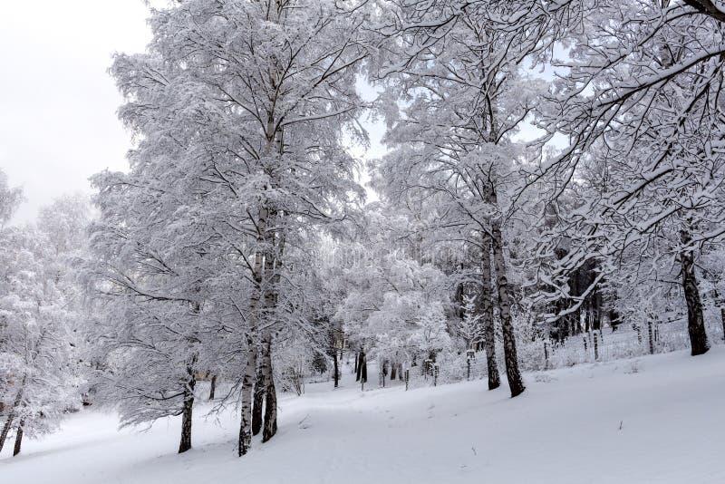 Invierno en el parque imagen de archivo