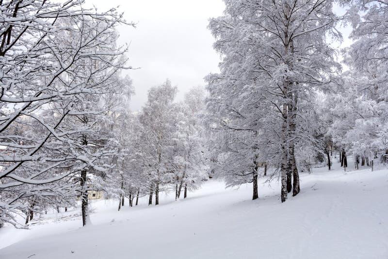 Invierno en el parque fotografía de archivo libre de regalías