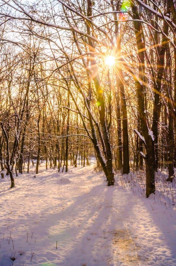 Invierno en el parque de la ciudad fotografía de archivo