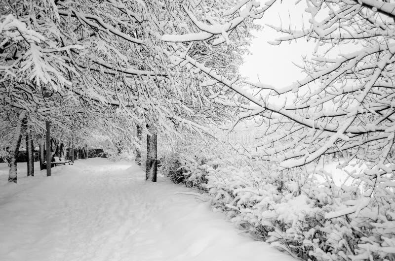 Invierno en el parque en febrero después del nevadas fotos de archivo
