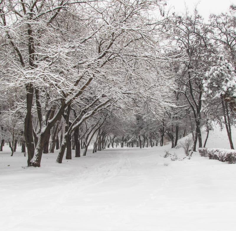 Invierno en el parque Kremenkug fotografía de archivo libre de regalías