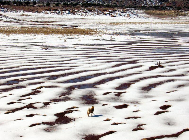 Invierno en el río Canadian foto de archivo libre de regalías