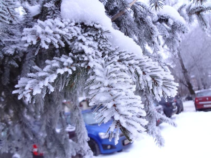 Invierno en la ciudad Una rama del abeto cubierta con nieve imagenes de archivo