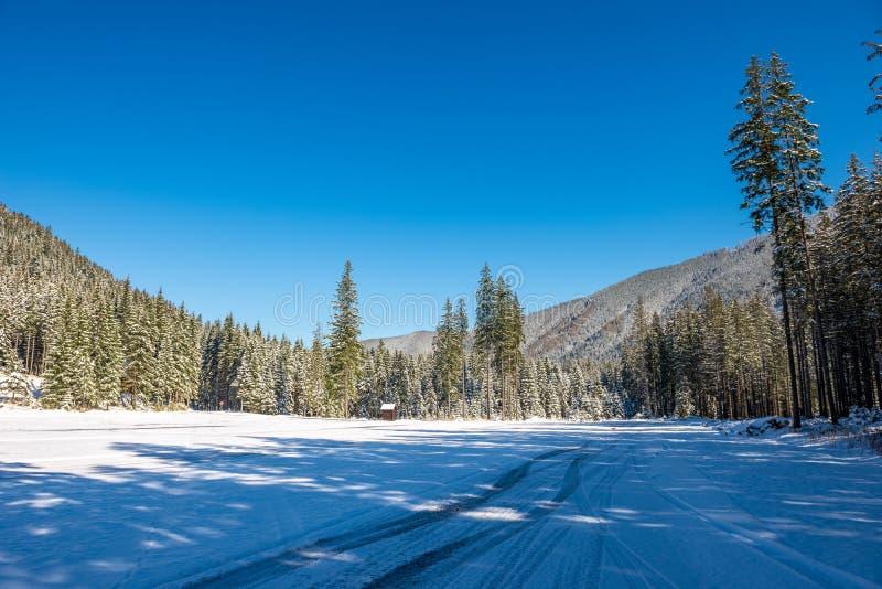 invierno en las montañas de Eslovaquia Tatra picos y árboles cubiertos en nieve imágenes de archivo libres de regalías