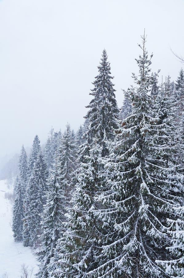 Invierno en los Cárpatos ucranianos fotos de archivo