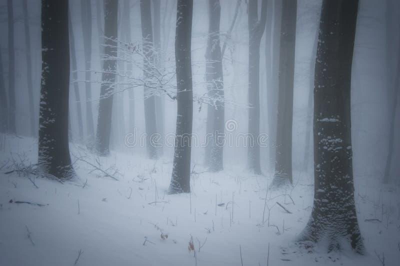 Invierno en un bosque con niebla y helada en árboles fotografía de archivo libre de regalías