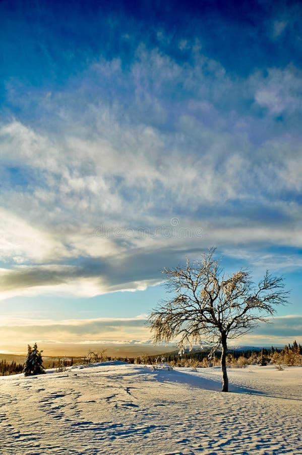 Invierno escandinavo fotografía de archivo