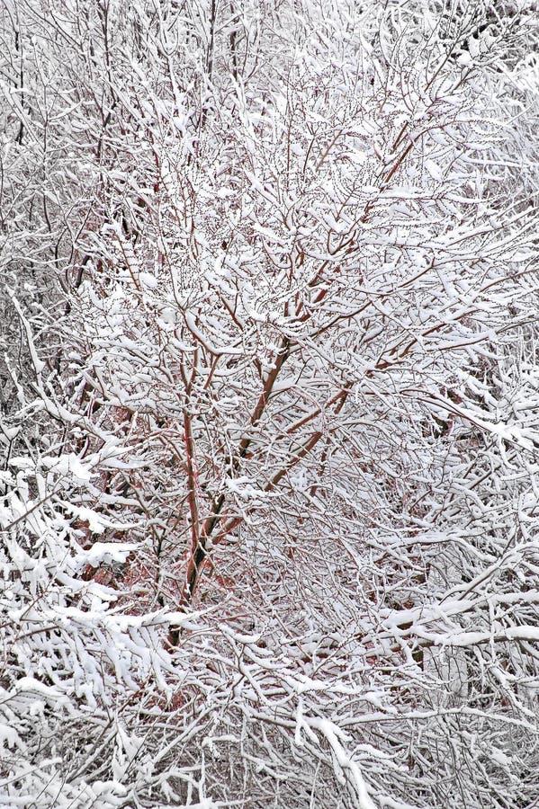Invierno Forrest imagen de archivo