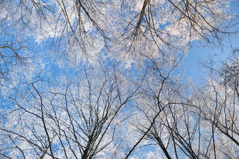 Invierno Frost en árboles imagen de archivo libre de regalías