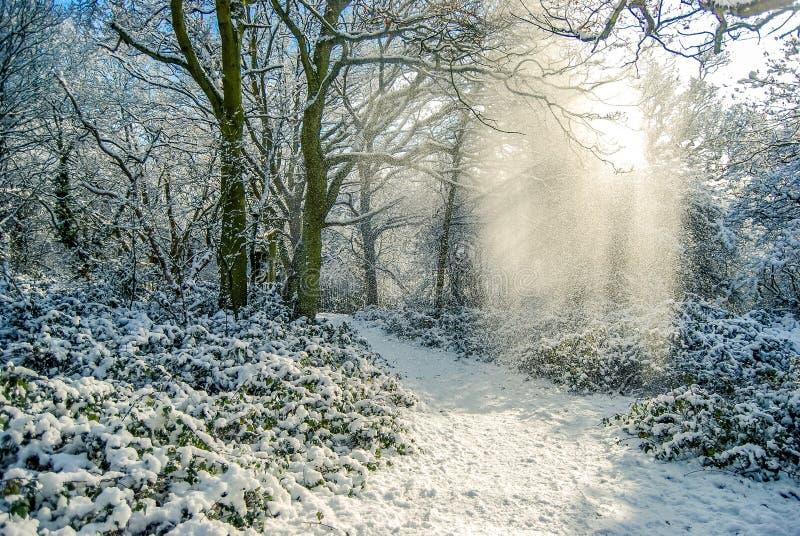 Invierno hermoso foto de archivo libre de regalías