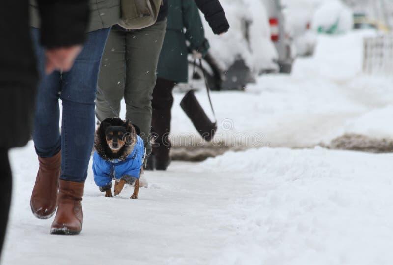 Invierno La gente y el perro caminan en una acera muy nevosa Paso de la gente en un camino nieve-perdido Acera helada Hielo en la imagen de archivo