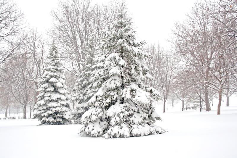 Invierno Nevado. fotos de archivo