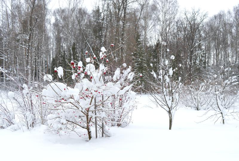 Invierno, nieve, árbol, paisaje, frío, bosque, naturaleza, blanco, cielo, helada, árboles, azul, escena, hielo, congelado, estaci foto de archivo libre de regalías
