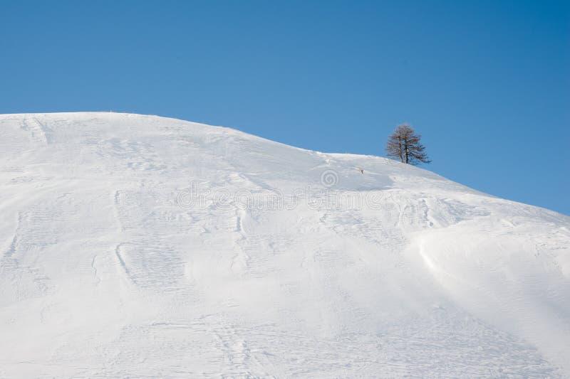 Invierno: nieve, árbol y cielo azul. foto de archivo libre de regalías