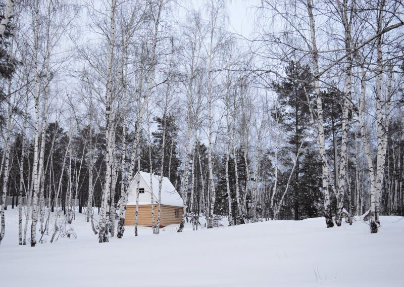 Invierno, nieve, bosque, árbol, frío, naturaleza, árboles, paisaje, blanco, abedul, helada, bosque, hielo, madera, estación, parq fotografía de archivo libre de regalías