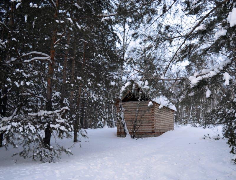 Invierno, nieve, bosque, árbol, frío, naturaleza, árboles, paisaje, blanco, abedul, helada, bosque, hielo, madera, estación, parq imagen de archivo libre de regalías