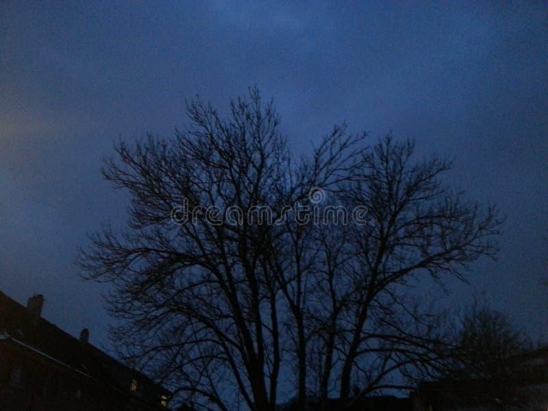 Invierno oscuro del árbol imagenes de archivo