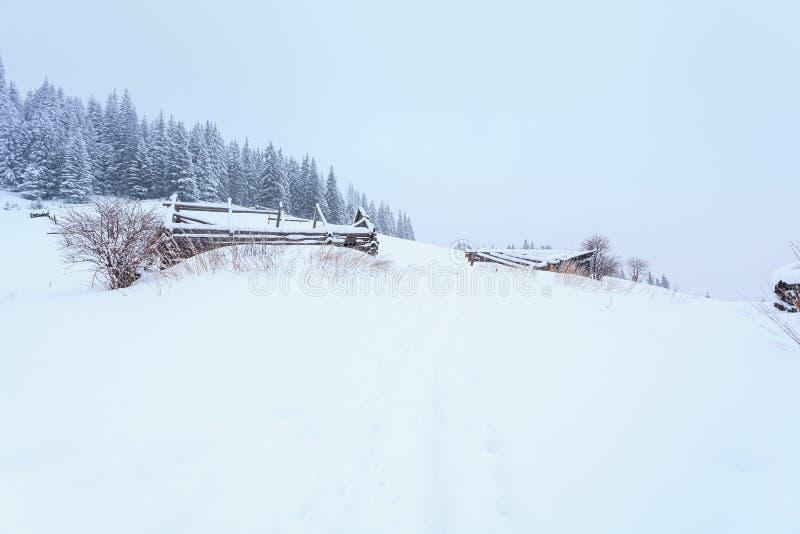 Invierno, prados, nieve, derivas fotografía de archivo libre de regalías