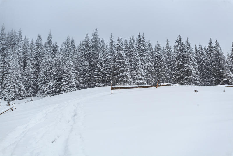 Invierno, prados, nieve, derivas fotografía de archivo