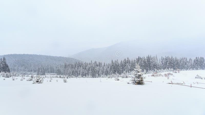 Invierno, prados, nieve, derivas fotos de archivo