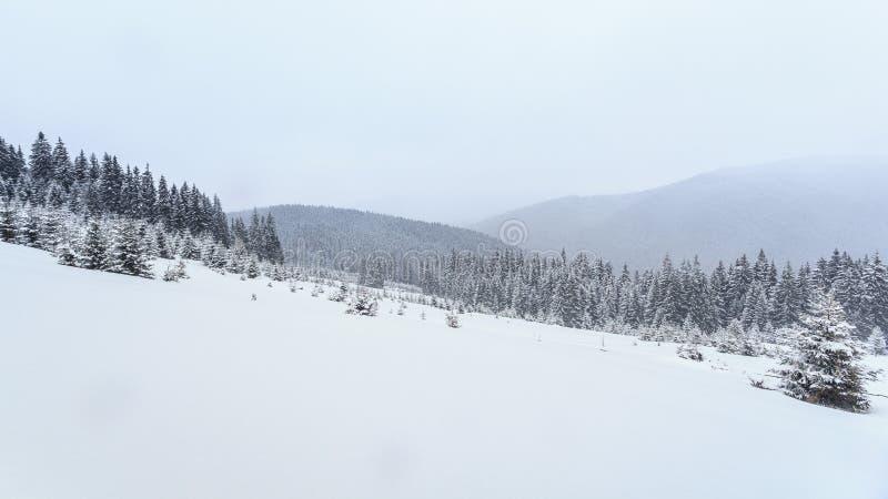 Invierno, prados, nieve, derivas foto de archivo