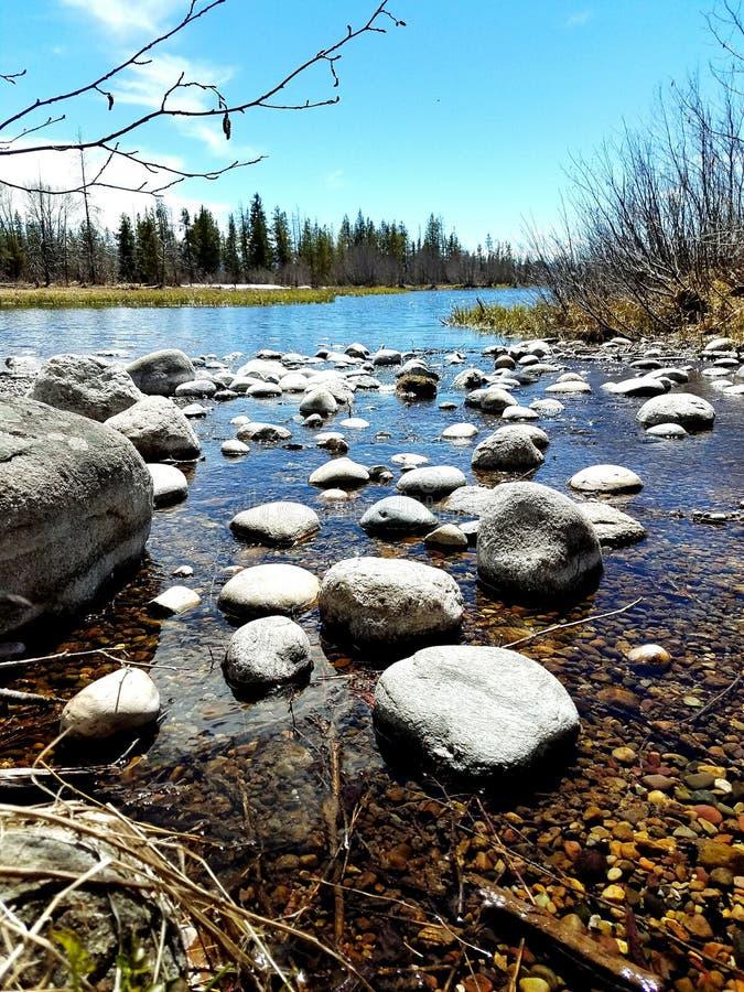 Invierno, ramitas, río y ciervos DOF fotos de archivo