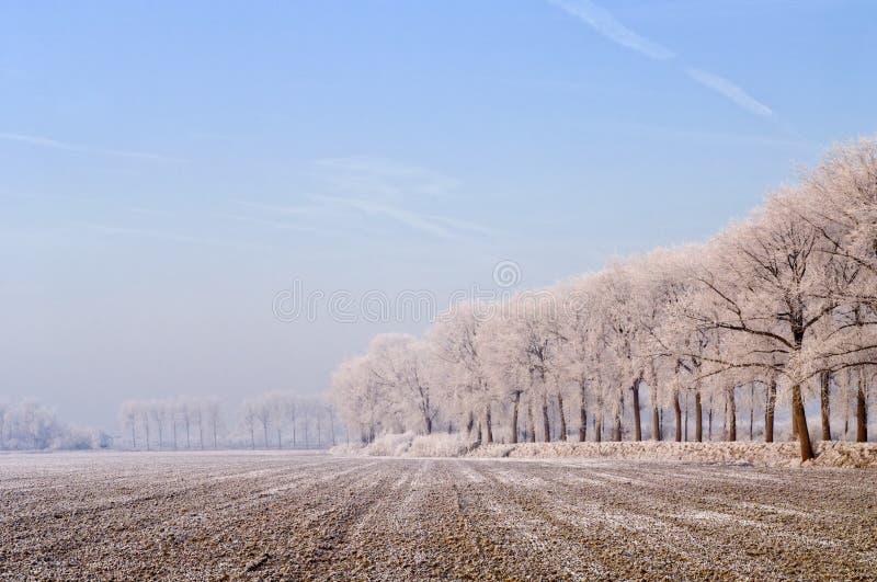 Invierno rural en Zelanda, los Países Bajos imagen de archivo libre de regalías