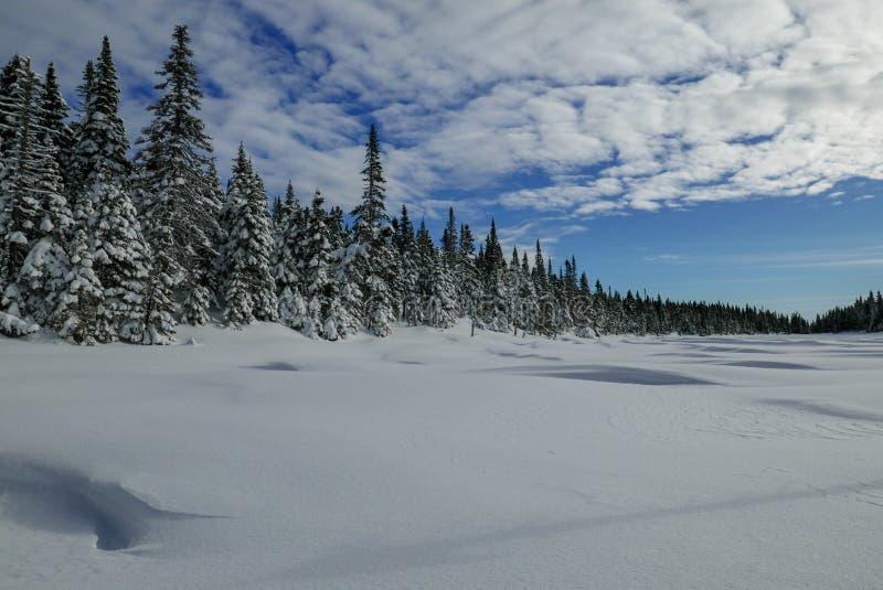 Invierno tirado de un lago congelado nevado del bosque boreal foto de archivo libre de regalías
