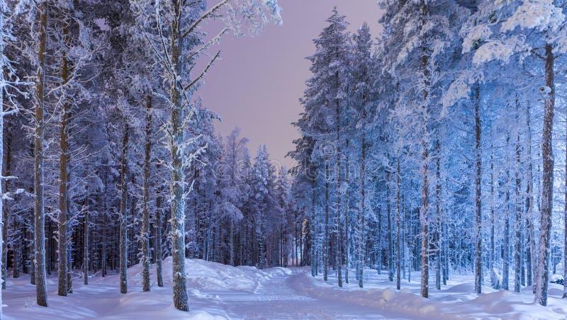 Invierno tranquilo asombroso Forest Scenery en área del nordic de Suomi imagenes de archivo