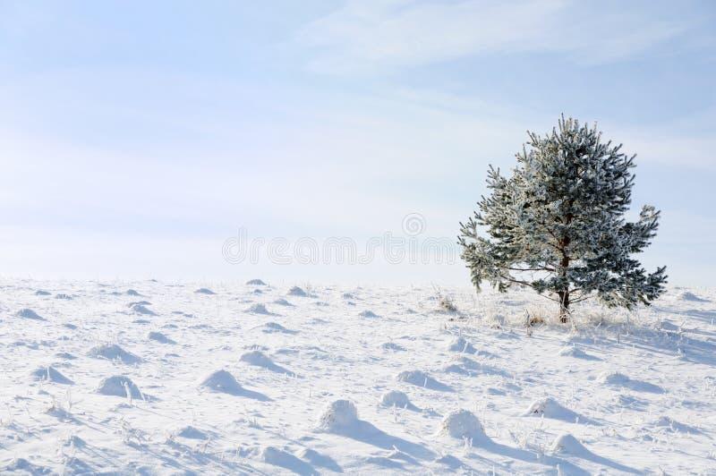 Invierno y escena de la nieve foto de archivo