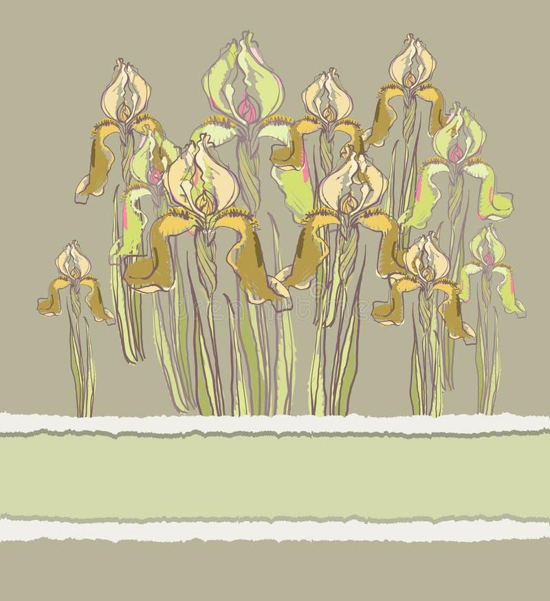 Invitación decorativa del modelo con las flores del iris, libre illustration