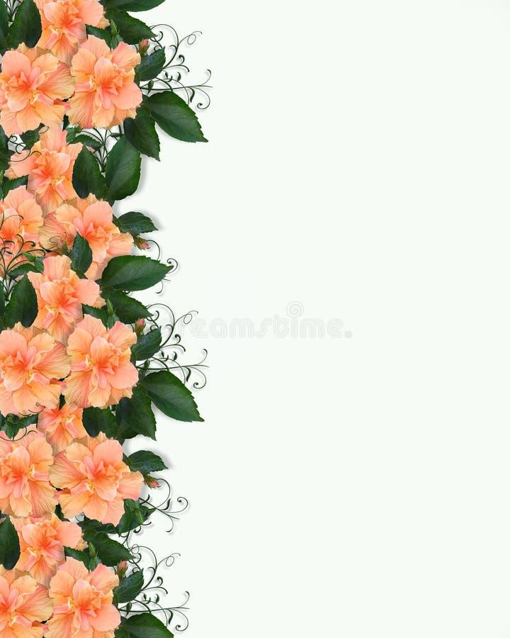 Invitación floral de la frontera del hibisco ilustración del vector