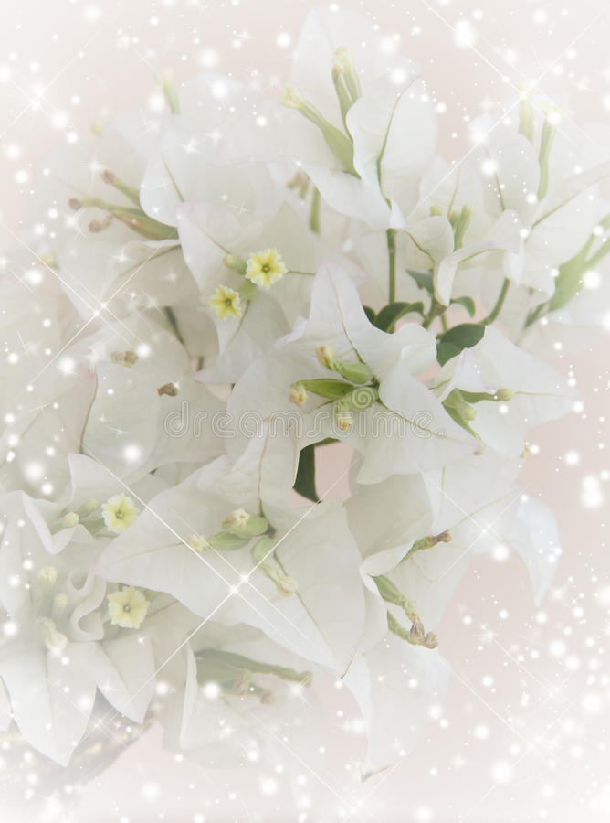 Invitation with bouquet of white flowers