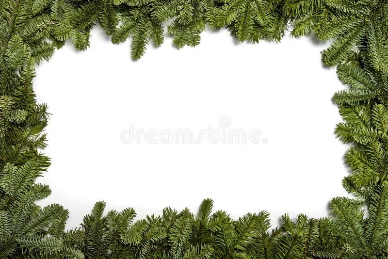 invitation new year 圣诞节装饰常青树开花问候一品红红色结构树 与一棵圣诞树的分支的框架,在白色背景 图库摄影