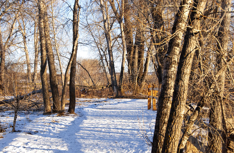 Inviting Path Through Snow With Fence Shadows Royalty Free Stock Photos