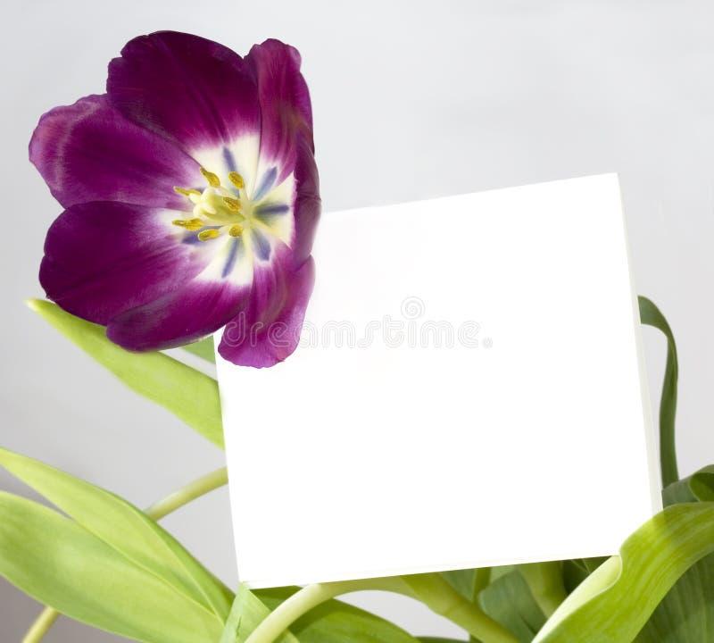 Invito immagine stock