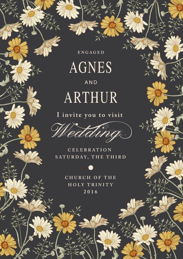 Invito di cerimonia nuziale Bella camomilla dei fiori Cartolina d'auguri dell'annata Pagina illustrazione vettoriale