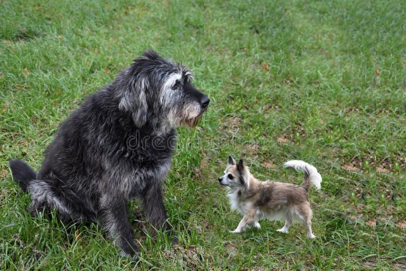 Invito a giocare, amici del cane incontrarsi fotografia stock