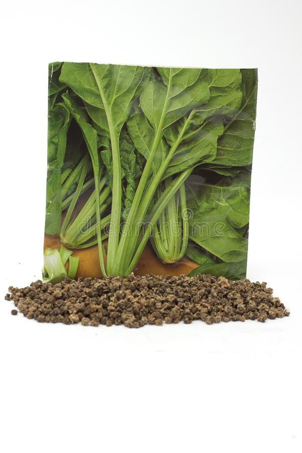 Involucro orticolo e semi di erbe conifere fotografie stock libere da diritti