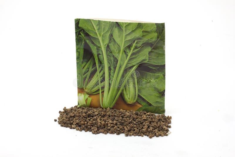 Involucro orticolo e semi di erbe conifere fotografia stock libera da diritti