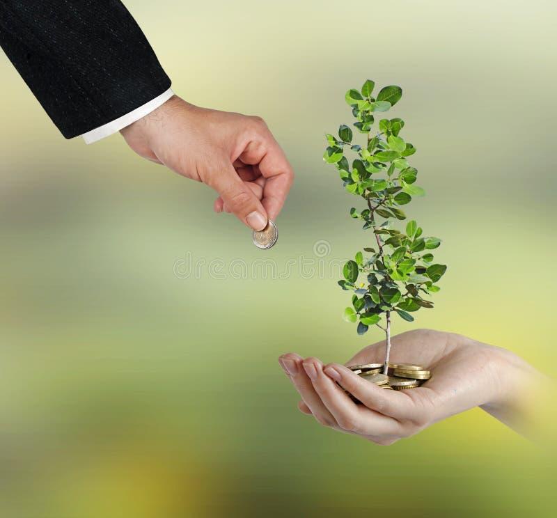 Inwestować zielenieć biznes zdjęcia royalty free