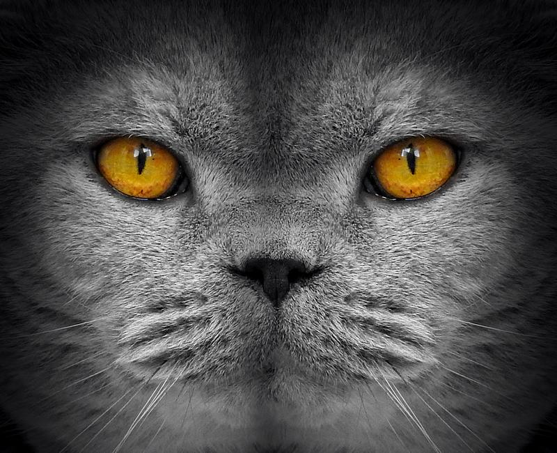 Inwigilacja kota oczu wzierny przeszpiegi fotografia stock