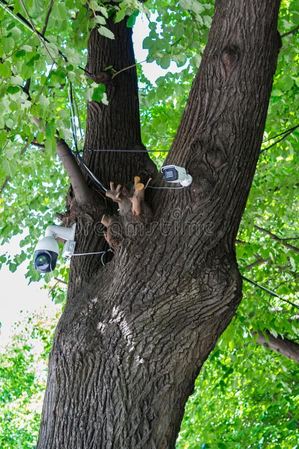 Inwigilacji CCTV kamery wspinali się na drzewie w parku zdjęcia stock