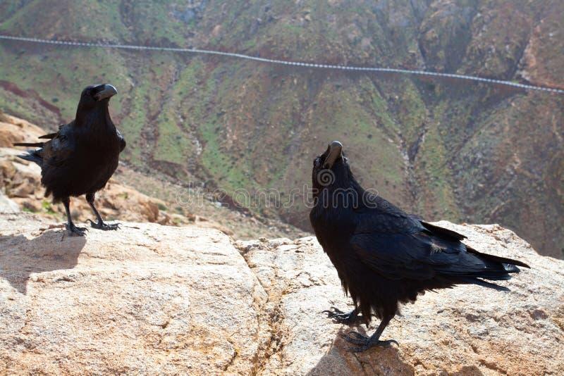Inwoners van de rotsachtige heuvel royalty-vrije stock foto's