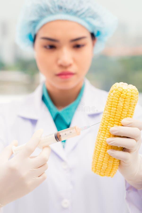 Inyección de la mazorca de maíz imagen de archivo