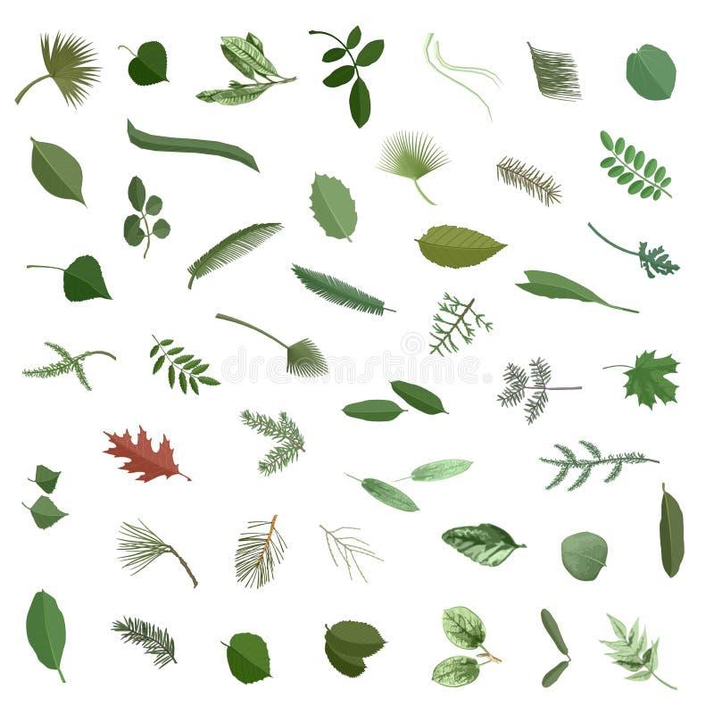 Inzameling 1 van bladeren stock illustratie