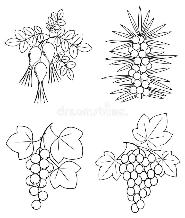 inzameling Een mooie tak van wilde roze bessen, bessen, duindoorn, druiven Grafisch beeld Nuttige smakelijke bessen voor vector illustratie