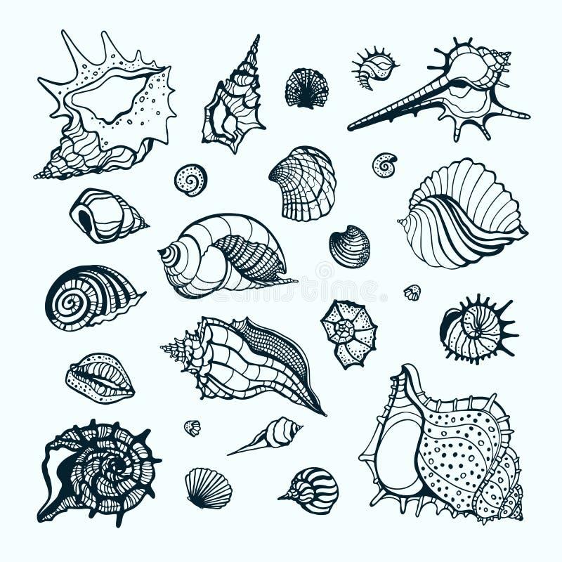 Inzameling met diverse overzeese shells vector illustratie