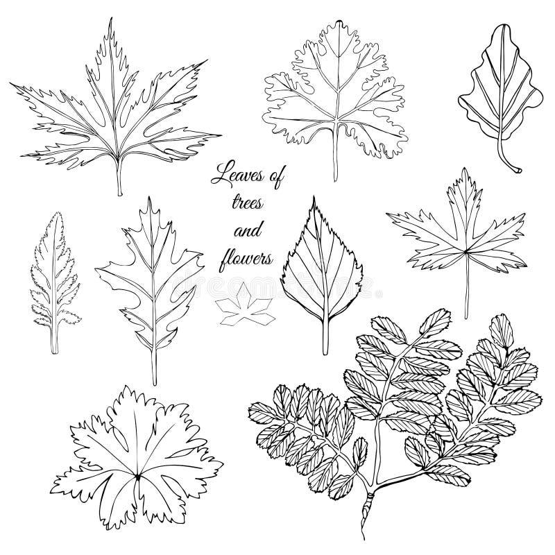 Inzameling met zwart-wit bladeren van bomen en bloemen Hand getrokken die inktschets op witte achtergrond wordt ge?soleerd stock illustratie
